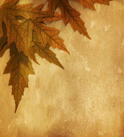 old paper with  dry autumn leaves photo