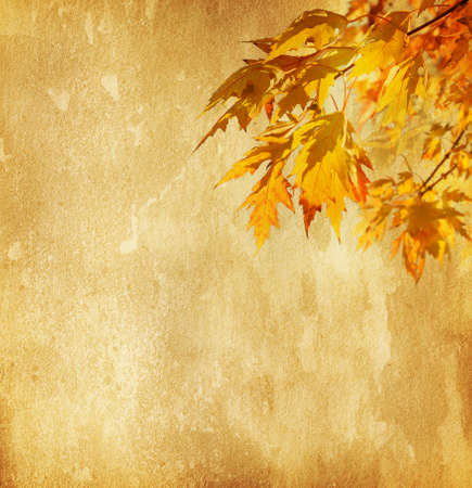 old paper with autumn leaves photo
