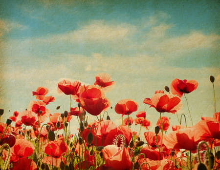 vintage  paper textures  Field of poppies  photo