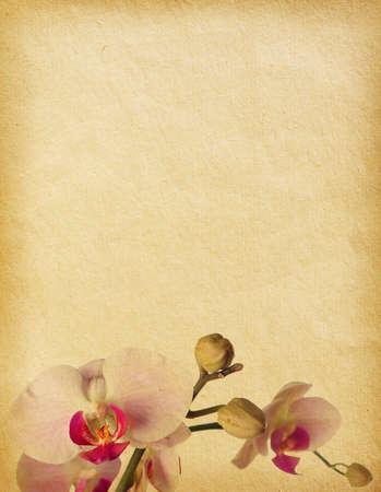 vintage papír textúrák az orchideák