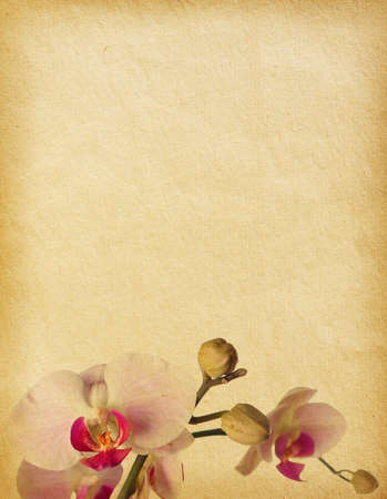 vintage  paper textures with orchids