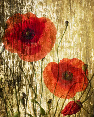 old red barn: red poppies on a grunge wood background Stock Photo