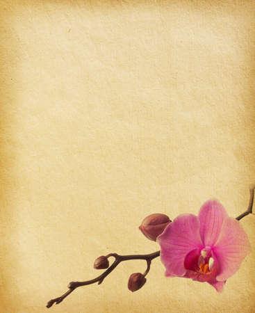 orchidee: carta d'epoca con orchidea Archivio Fotografico