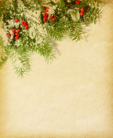 fir twig: fir twig  on old paper  red berries - Pyracantha