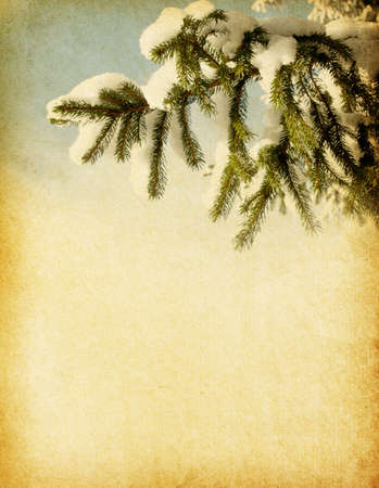 aged paper texture with spruce Stock Photo - 15550512
