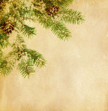 fir twig: fir twig on old paper