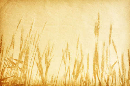 vintage paper textures  field of wheat  photo