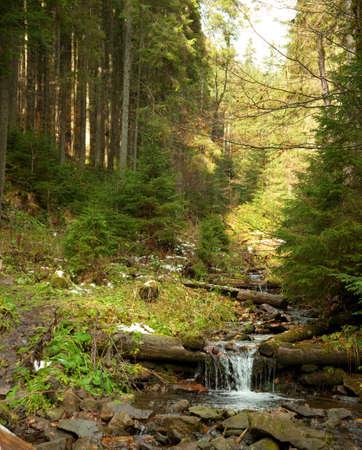 winter thaw: Woodland Stream  A fast flowing stream running through woodland