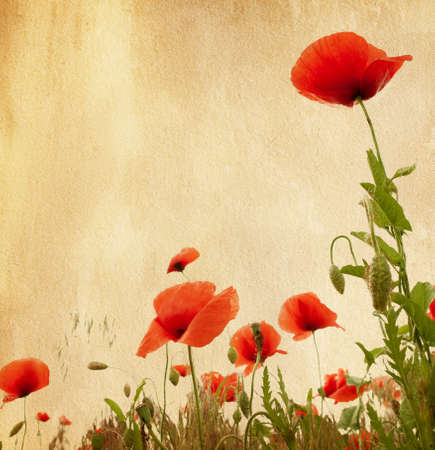 old paper texture with poppies photo