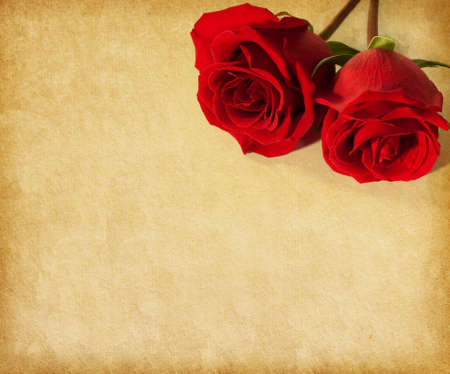 old paper texture with two  dark red roses photo