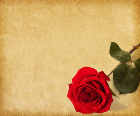 old paper texture with dark red rose photo