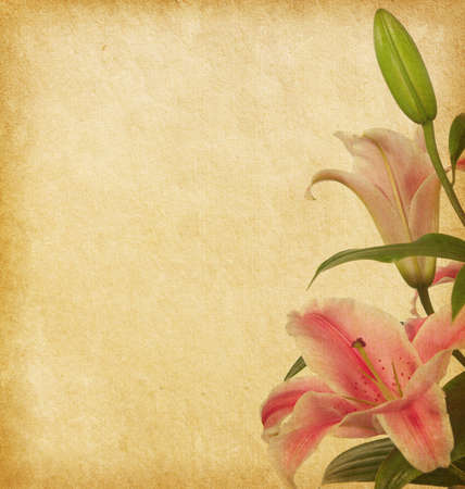 Beige paper background  with lilies   photo
