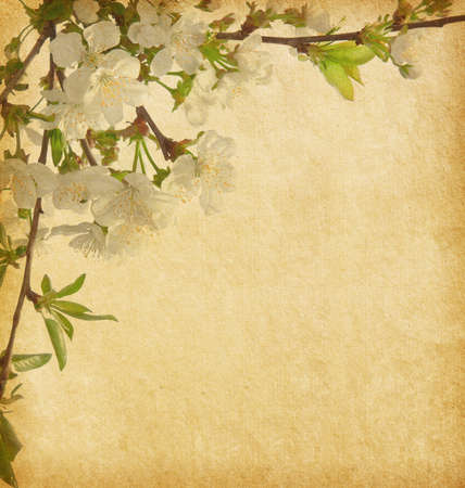 Beige  paper background with cherry blossom   photo