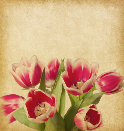 Beige paper   with tulips photo