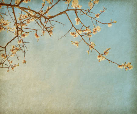 worn paper: grunge paper with cherry blossom