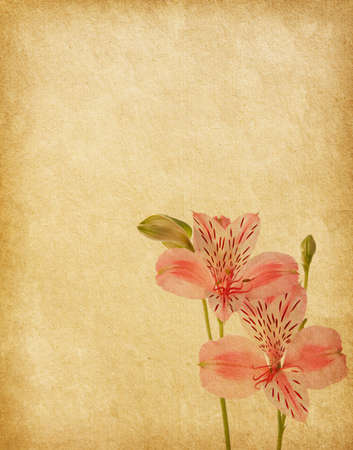 Alstroemeria flowers against a background of old paper photo