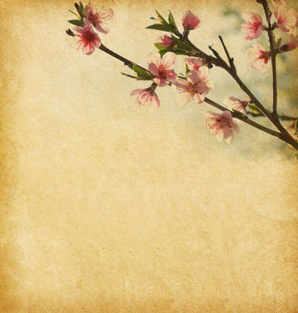 peach blossom: Old  paper with peach blossom