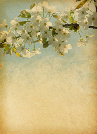 grunge tree: grunge   paper background with cherry blossom
