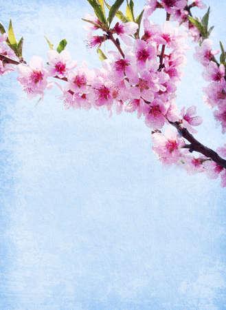 flor de durazno: papel del grunge con flor de durazno