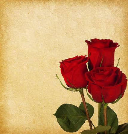 régi papír textúrák rózsákkal Stock fotó