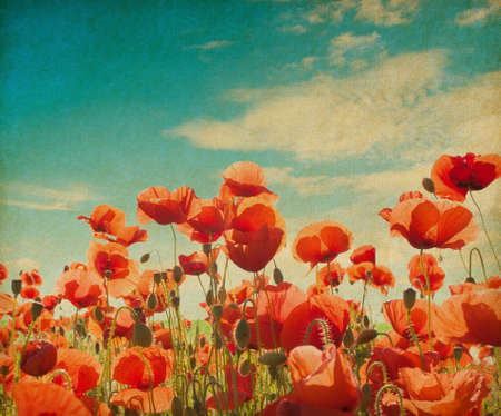 Vintage poppy field agains blue sky. Paper texture. photo