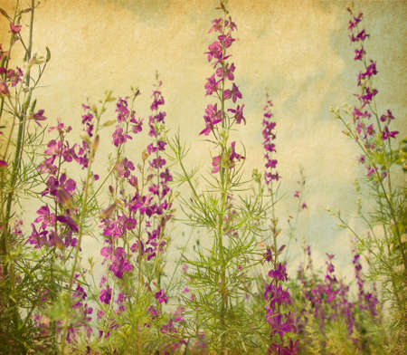 retro   image old paper  with   violet delphiniums.