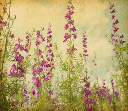 retro kép régi papír lila szarkaláb.