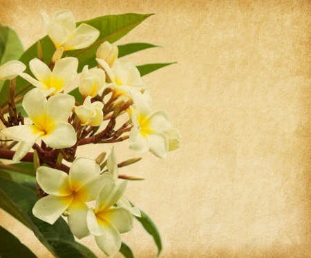 spotted flower: old paper with tropical flowers  Plumeria