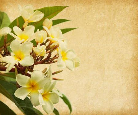 pergamino: papel viejo con flores tropicales Plumeria