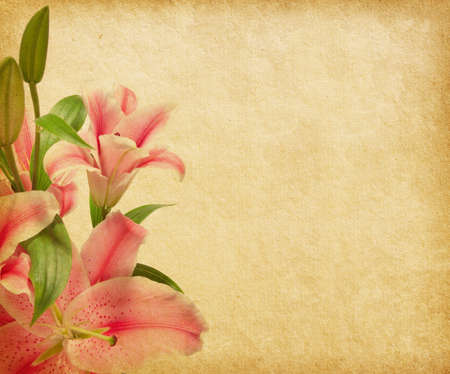 pink lily: Beige paper background with lilies  Stock Photo