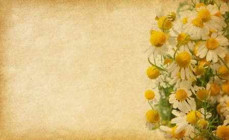 worn paper: Antiguo papel usado con chamomiles