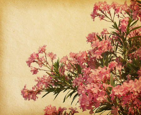 pink flowers of oleander  in retro style photo