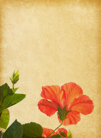 Paper texture with red Hibiscus photo
