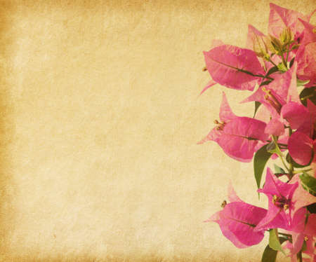 pink bougainvillea against a background of old paper photo