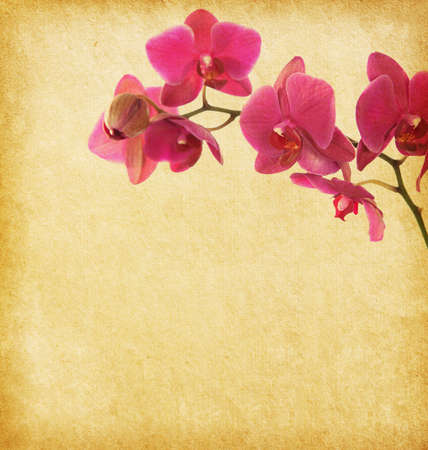 paper background with purple orchid