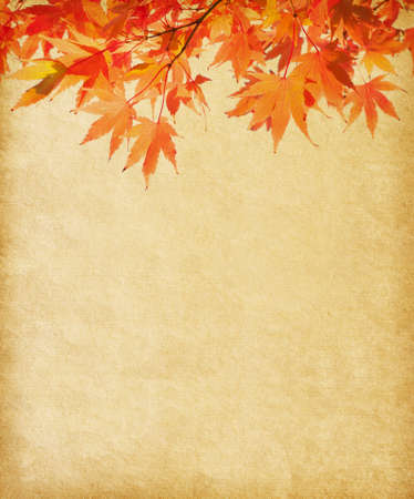 rowan tree: old paper with autumn leaves
