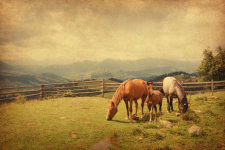 rancho: Dos caballos y potro en el prado Foto de estilo retro textura de papel