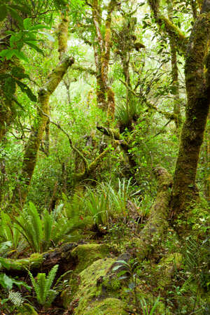 temperate: Temperate rain forest, Te Urewera National Park, North Island, New Zealand