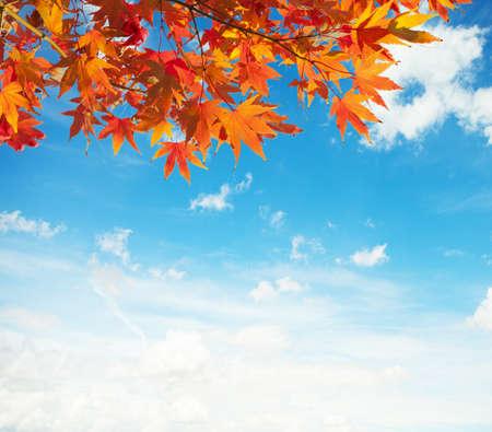 Színes őszi levelek ellen, kék ég Stock fotó
