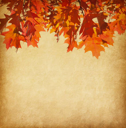 rusty background: old paper with orange autumn leaves Stock Photo