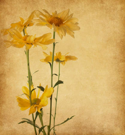 old paper texture with yellow flowers photo