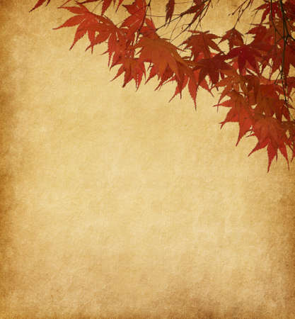 old paper with red autumn leaves photo