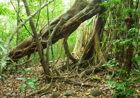 nam: Jungle in Nam Cat Tien National Park  Southern Vietnam   Evergreen Tropical Forest Stock Photo