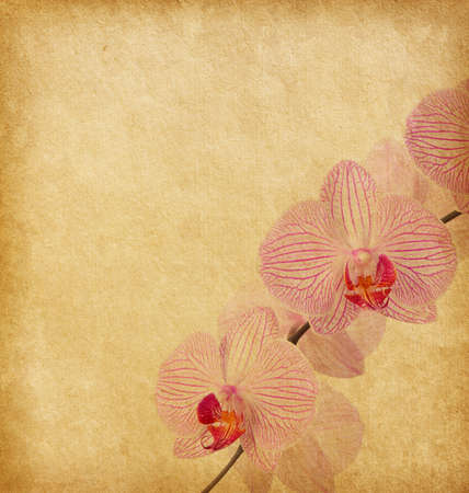 Old worn paper with  orchid photo