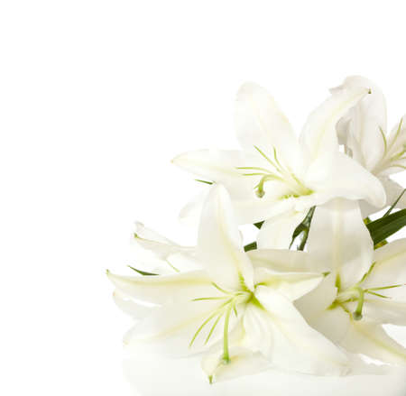 a fragment of white lilies Imagens - 25347327