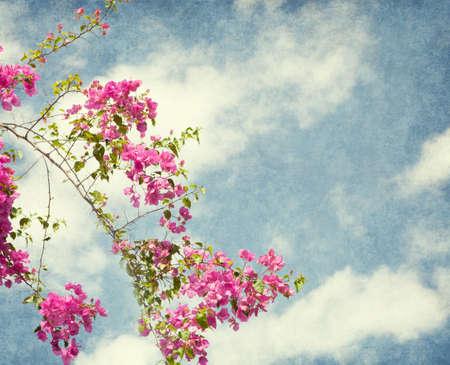 bougainvillea: Bush of Bougainvillea flowers  against the blue sky  Amygdalus triloba  Added paper texture