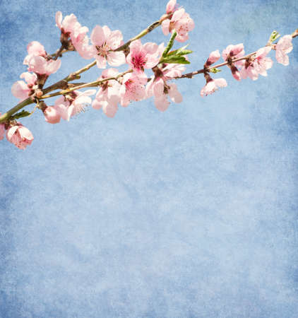peach tree: Old paper with peach blossom