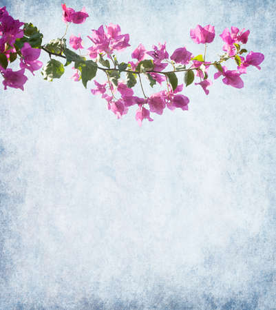 Dark pink bougainvillea against a background of old paper photo
