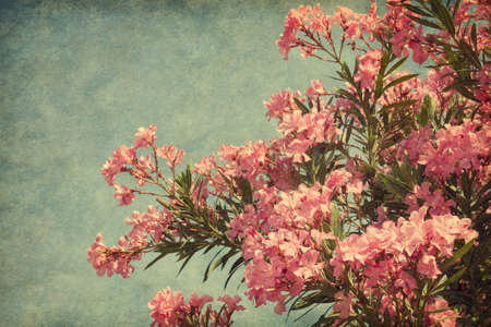 Pink flowers of oleander in retro style   Added paper texture   photo