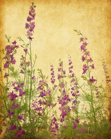 Old paper background with delphinium flowers photo